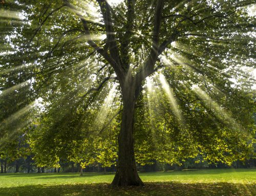 How To Choose The Best Tree Service Company